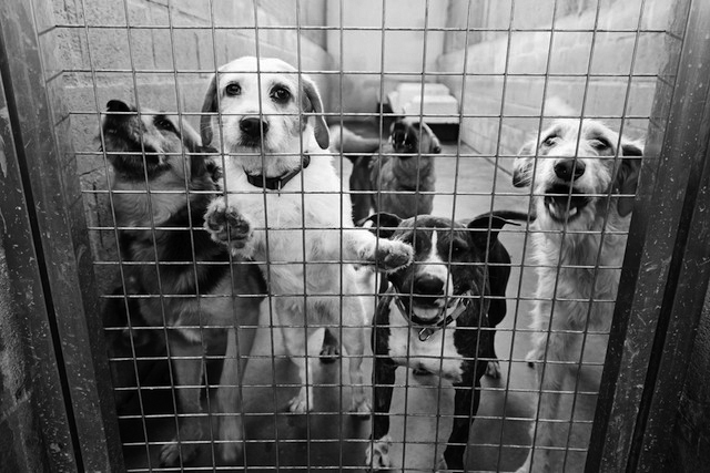 動物愛護後進国の日本ペットビジネス業界の闇
